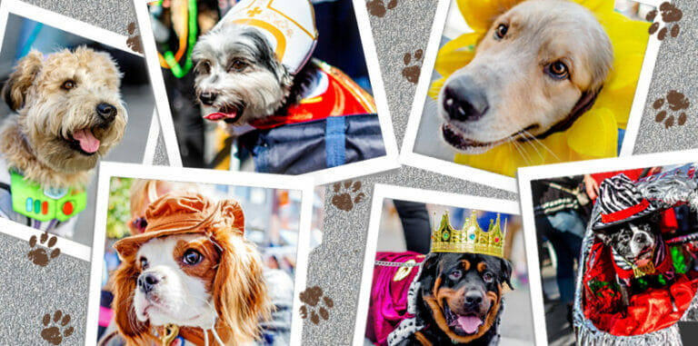 A collage of images of dogs dressed up in Halloween costumes.